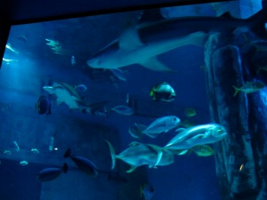 Flashback Friday: London Aquarium + ZSL London Zoo